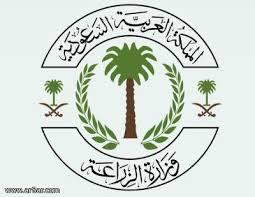 وزارة التعليم تقرر إعادة العمل بنظام الفصل الصيفي للمرحلة الثانوية