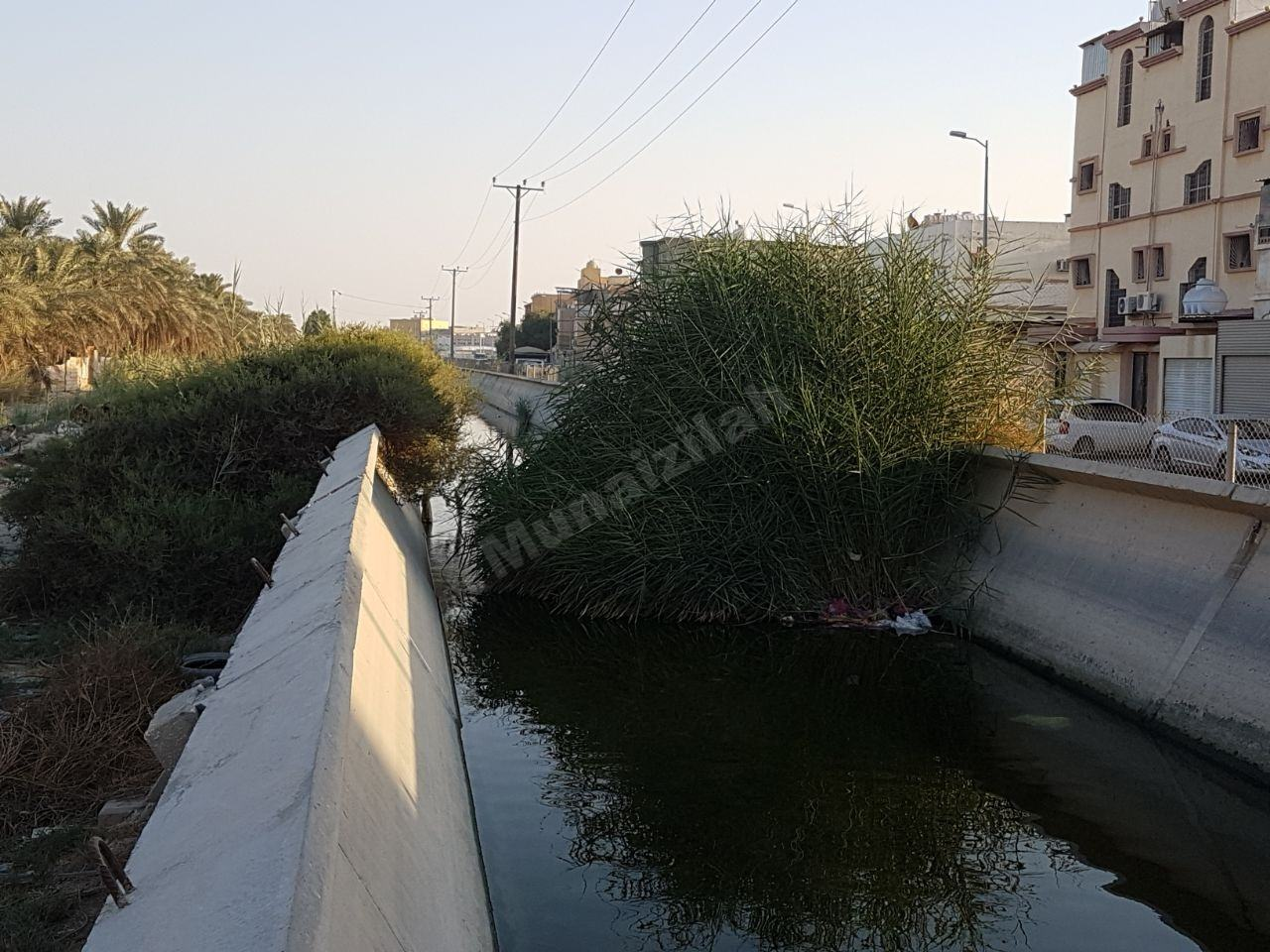 """بالصور : حشائش وأوساخ تشكل عائق لمجرى المياه في قناة """"الري"""" بالمنيزلة"""